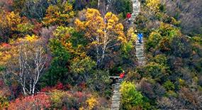 白石山红桦节9月22日启幕 活动持续至10月底