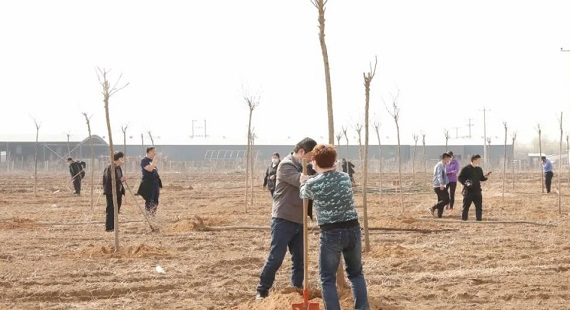 淶水縣開展義務植樹活動